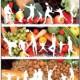 Taller de menús saludables i econòmics